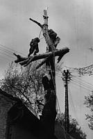 Baumfällarbeiten 1967